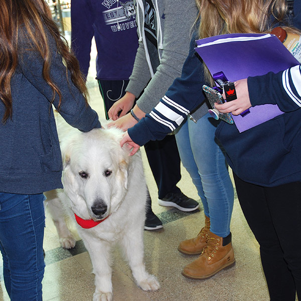therapy dogs and students