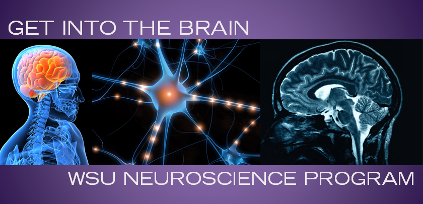 Neuroscience Program