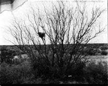 photo of birdnest in bare tree.