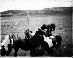 Photo of horses and a plow.