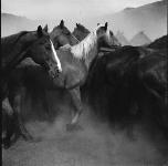 "Photo ""Remuda, Spanish Ranch"" by Adam Jahiel."