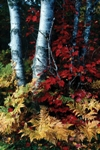 """""""Tahquamenon Falls"""" by Richard Caldwell"""