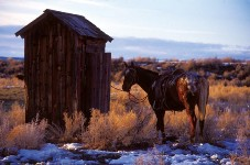 outhouse with a horse tied to it